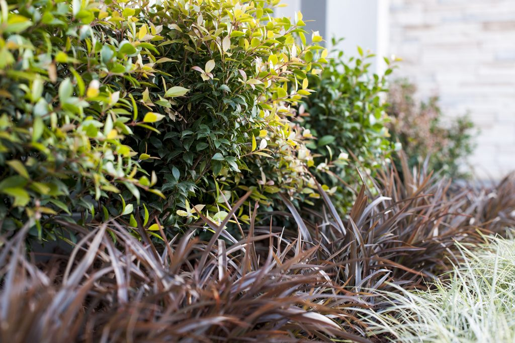 140613 Gregory Hills Landscaping 074 1024x682